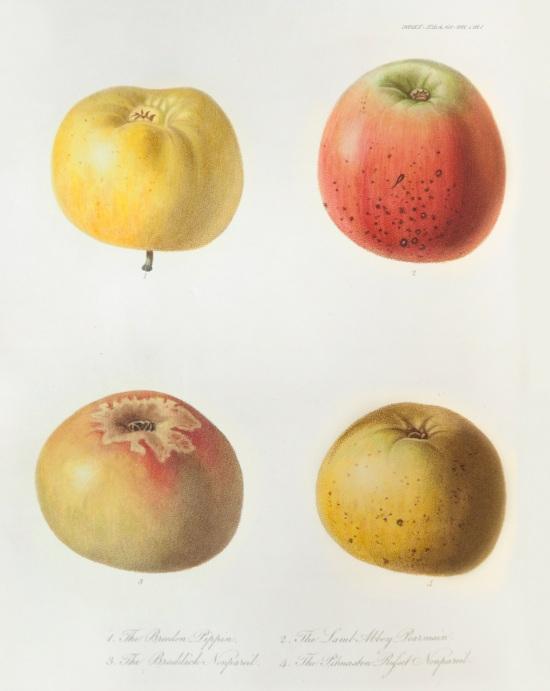 Four New Seedling Dessert Apples