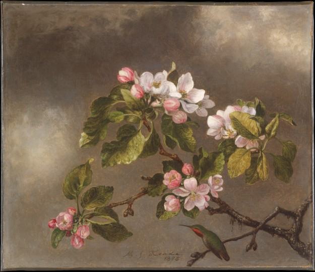 Martin Johnson Heade, Hummingbird and Apple Blossoms
